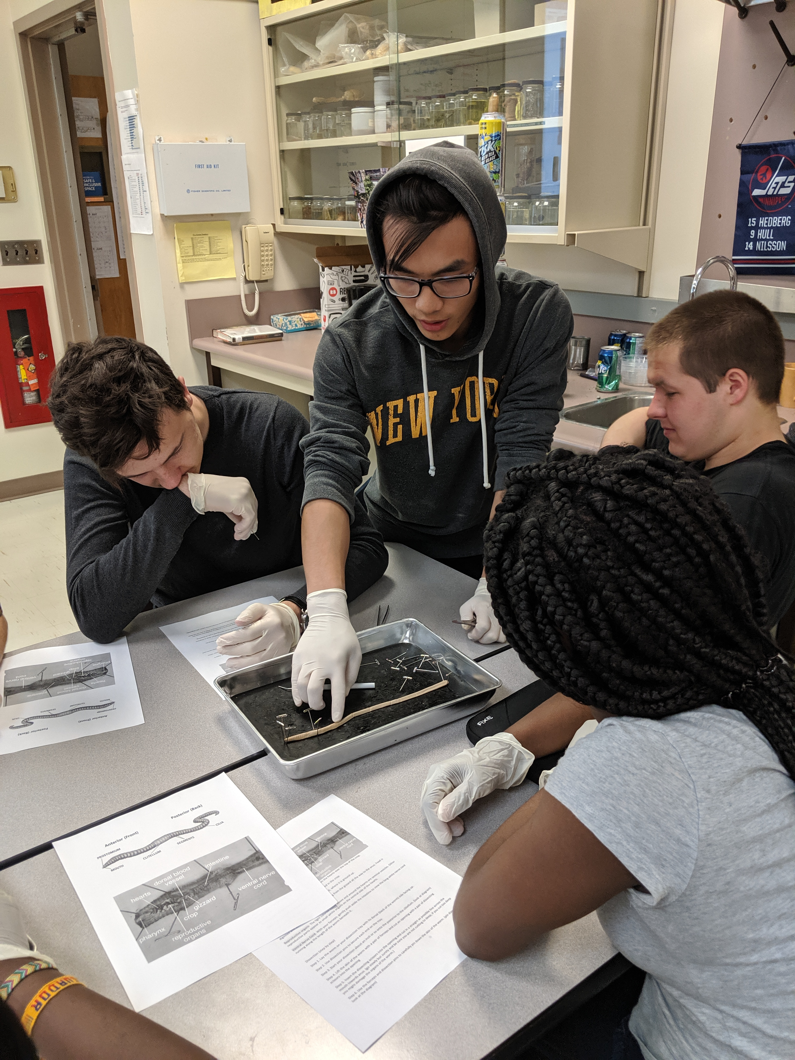 Read more about the article Student led dissections